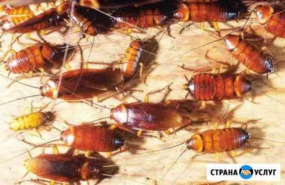 Уничтожение тараканов, клопов, гнезд ос, мышей Севастополь