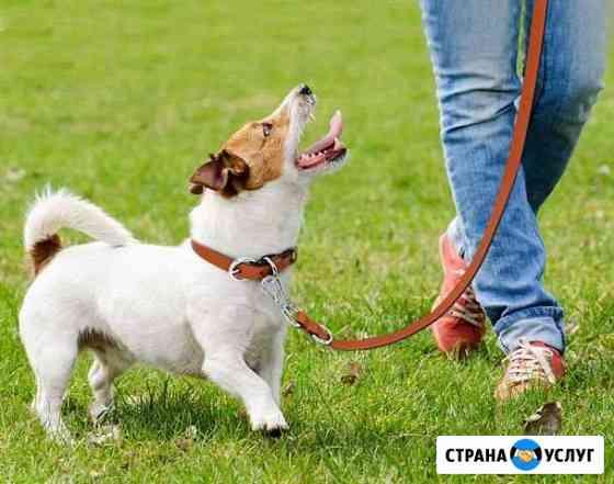 Выгул собак Красноярск
