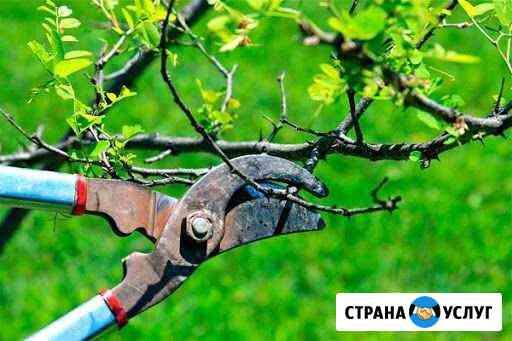 Обрезка деревьев Воронеж