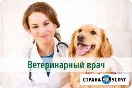 Ветеринарный врач на дом Тула