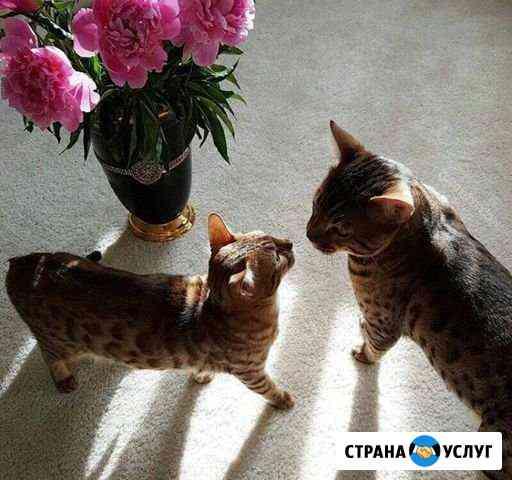 Передержка котов/кошек, собак маленьких пород Кудрово