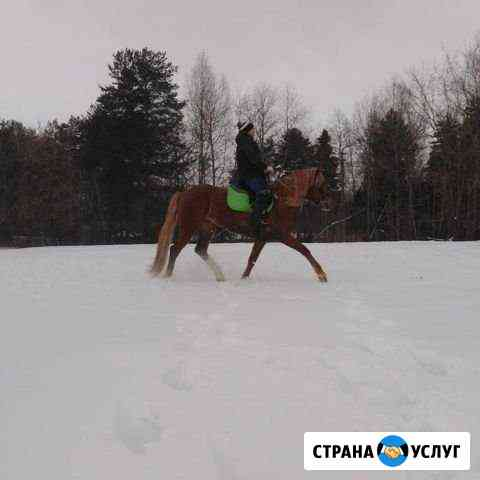 Катание на лошадях, заказ лошади на праздник Пермь
