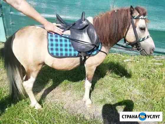 Пони на праздник, прокат Красносельское