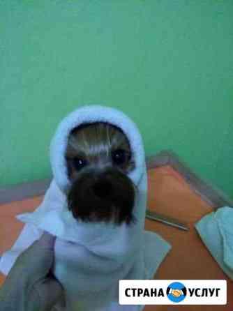 Услуги по стрижке собак Томск