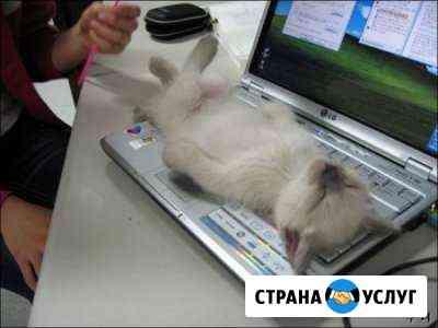 Ремонт компьютеров/ноутбуков Вологда Вологда