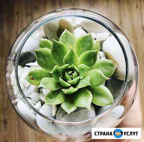 Флорариум Майкоп