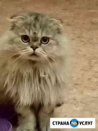 Кот на вязку Астрахань