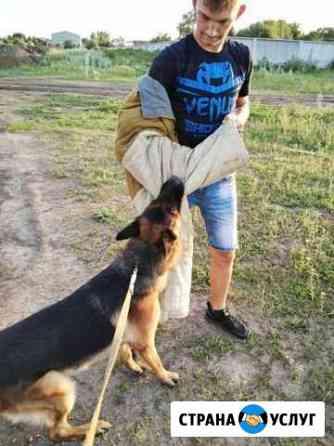 Дрессировка собак Батайск