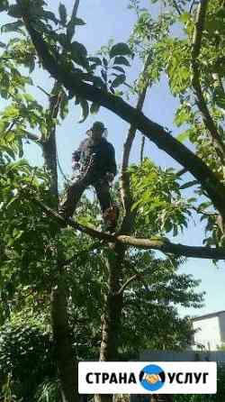 Спил деревьев Михайловск
