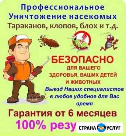 Дезинсекция. Профессиональное уничтожение насекомы Томск