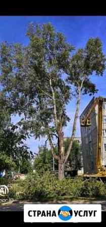 Спил, удаление деревьев Боровск