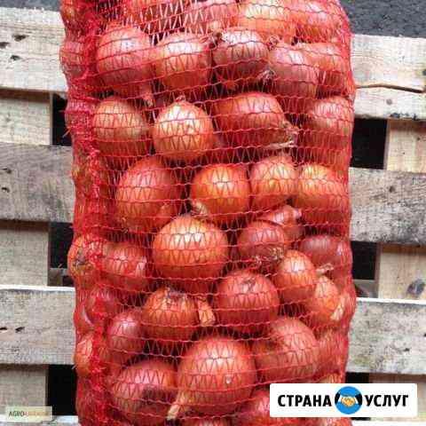 Доставка лука в сетках, моркови в мешках Знаменск