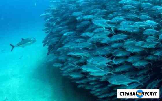 Репетиторство начальных классов Рузаевка