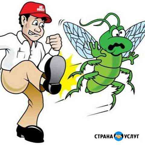 Уничтожение насекомых Черемхово