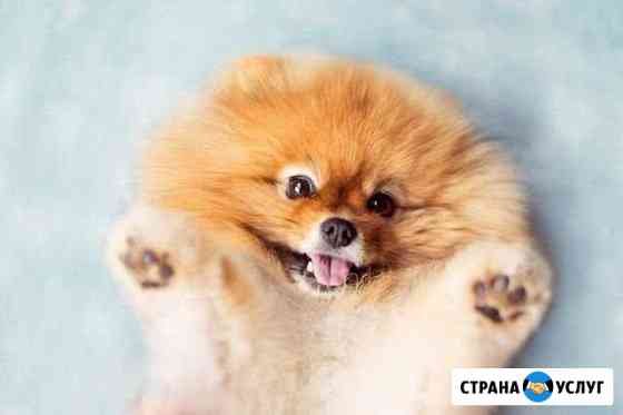 Выгул собаки Тольятти