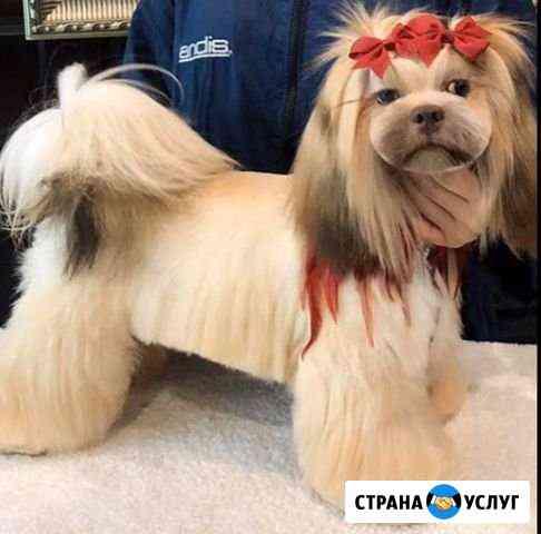 Стрижка собак и кошек Хабаровск