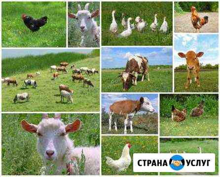 Доставка кормов для сельскохозяйственных животных Казань
