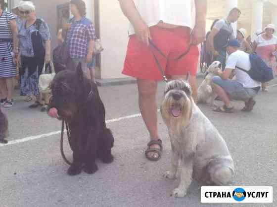 Грумер, стрижка собак любых пород Феодосия