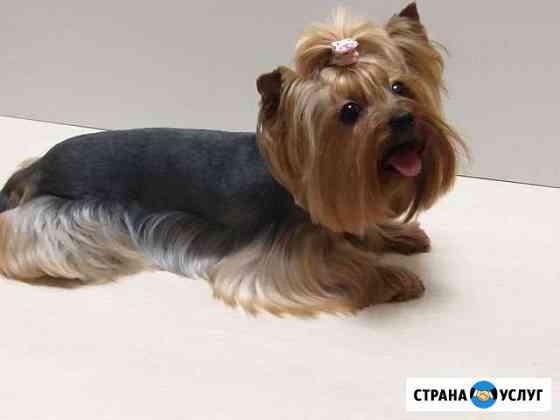 Стрижка собак и кошек Ростов-на-Дону