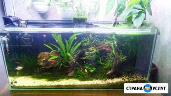 Обслуживание и запуск аквариумов любой сложности Казань