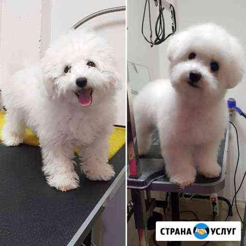 Зоосалон: стрижка животных (парикмахерская) Петрозаводск