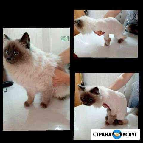 Стрижка кошек акция Ижевск