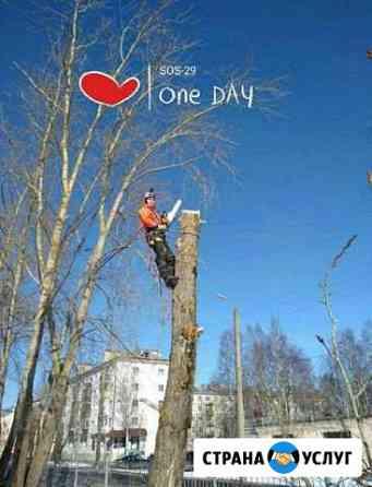 Обрезка деревьев Карпогоры