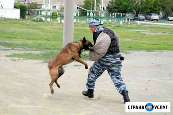 Дрессировка собак в Новороссийске Новороссийск