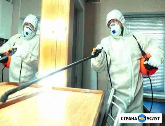 Уничтожение клопов Хабаровск