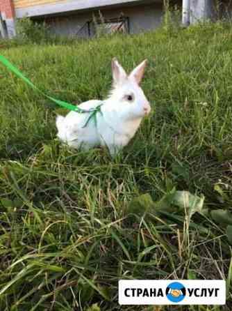 Вязка декоративного кролика Йошкар-Ола