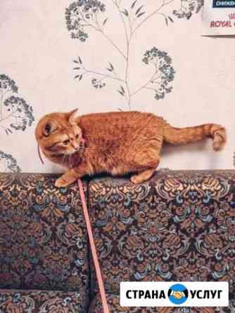 Кошка на новоселье Санкт-Петербург