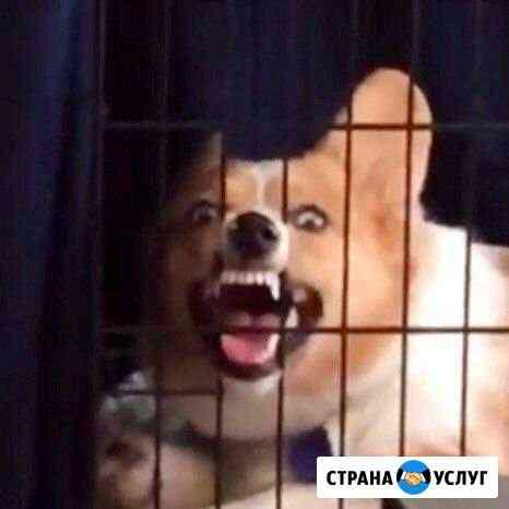 Dog sitter Брянск