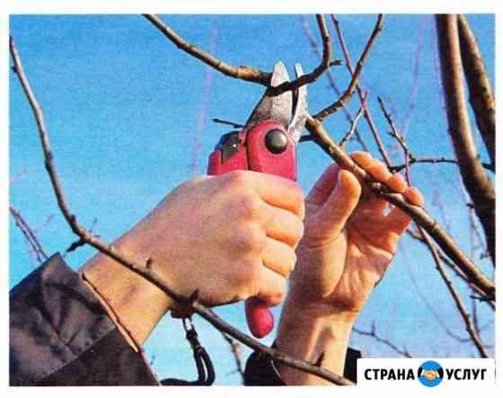 Обрезка плодовых деревьев и кустарников на плод Калуга