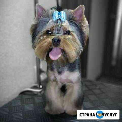 Стрижка собак Новороссийск