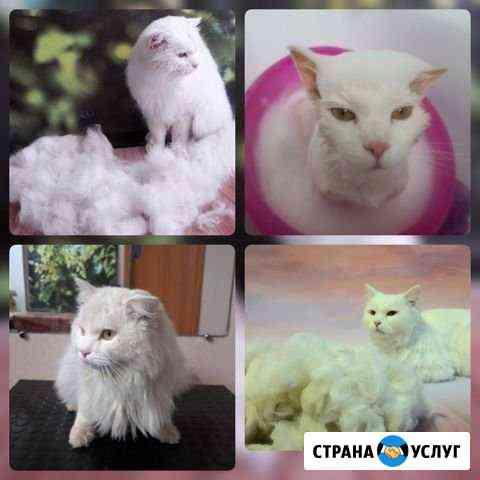 Стрижка кошек и собак Кунгур