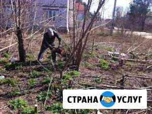 Подрезка деревьев Челябинск