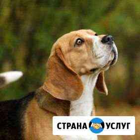 Усыпление и кремация домашних животных Пермь