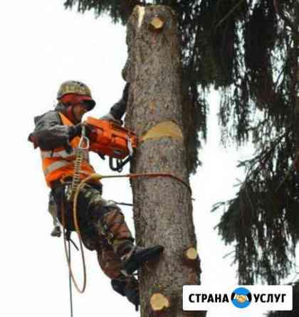 Спил обрезка деревьев. высотные работы. арборист Сарапул