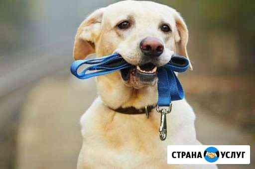 Выгул собак Тула