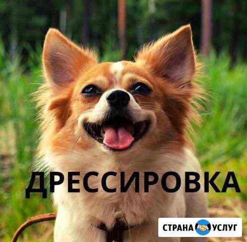 Дрессировка собак,зоотакси,передержка собак Казань