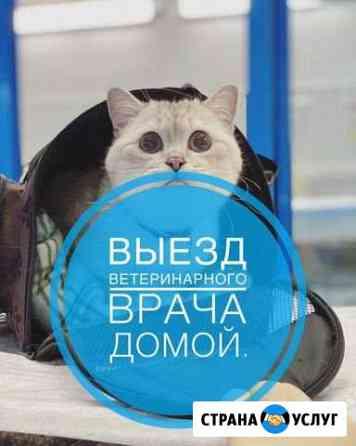 Ветеринарный врач на дом. Ветеринар Санкт-Петербург