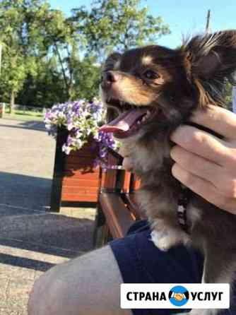 Прогулка с собакой Санкт-Петербург