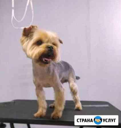Груминг / стрижка собак Ростов-на-Дону