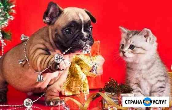 Зоогостиница.передержка животных Брянск