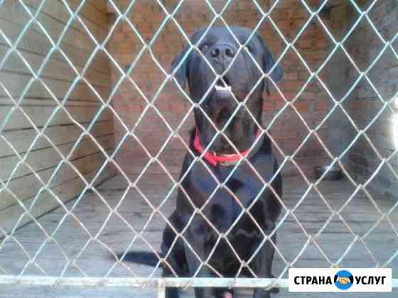 Передержка собак Таганрог