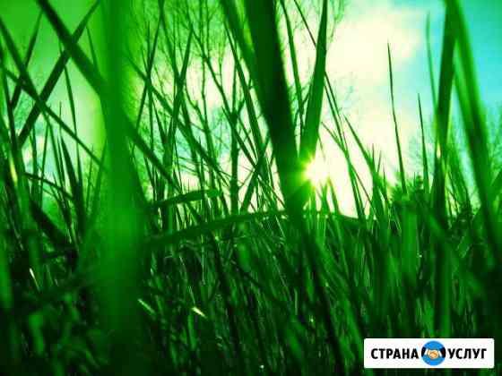 Трава Новохоперск
