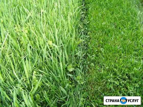 Скос травы Шуя