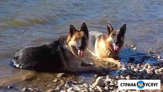 Дрессировка собак в Красноярске Красноярск