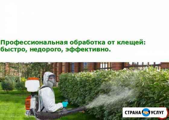 Обработка участков от клещей, комаров, мух Курск