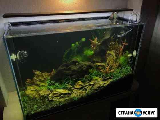 Чистка аквариумов в Самаре Самара